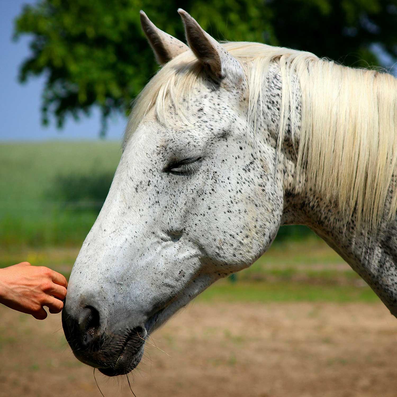 learn-horse-reiki