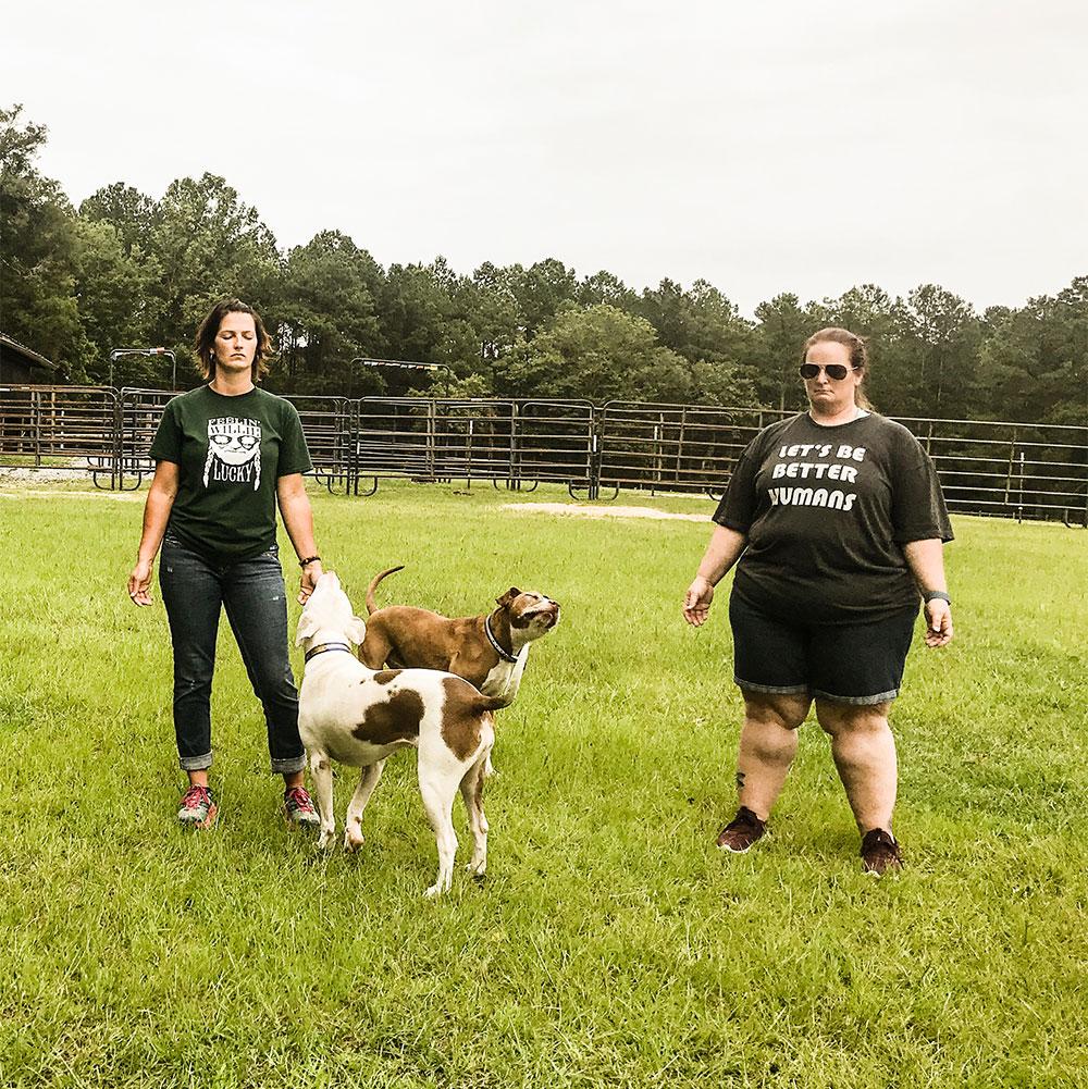 animal-reiki-classes-dog-group