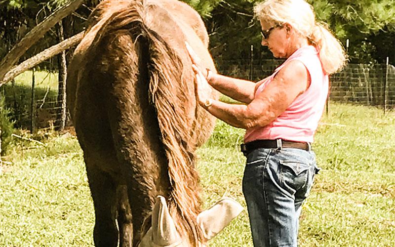 horse-reiki-2-advanced-classes
