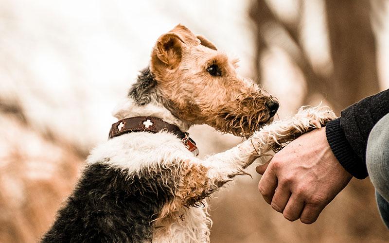 self-healing-animal-caregiver-classes